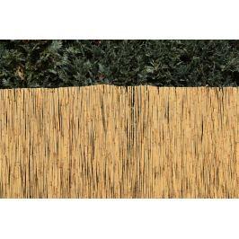 Rákosový plot Rozměry: 100x600