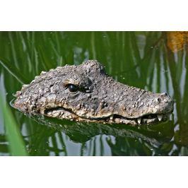 Vodní dekorace Krokodýl