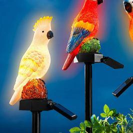 Solární zápich Papoušek Karel