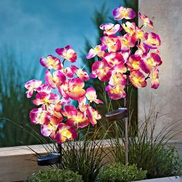 Solární zápich Orchidej, 2 ks